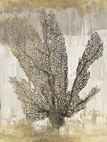 Coral Splendor I Fine Art Print