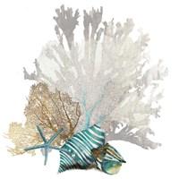 Coral Fine Art Print