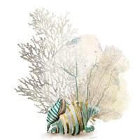 Coral II Fine Art Print