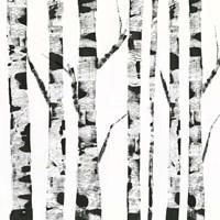White Birch Fine Art Print