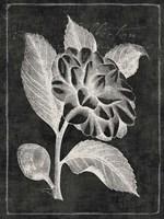 Black Botanical II Fine Art Print