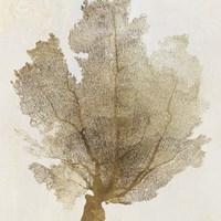 Gold Coral I Fine Art Print