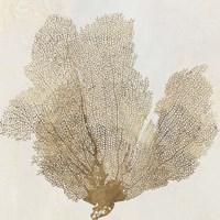 Gold Coral II Fine Art Print