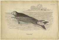 Sea Otter Fine Art Print