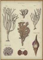Sponge Fine Art Print