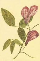 Butterfly Pea Fine Art Print