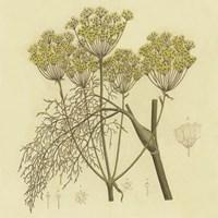 Yellow Weeds Fine Art Print
