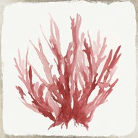 Red Coral I Fine Art Print
