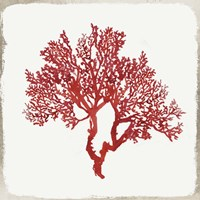 Red Coral II Fine Art Print