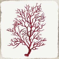 Red Coral III Fine Art Print