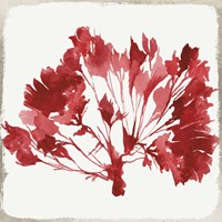 Red Coral IV Fine Art Print