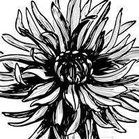 Floral Outlines II Fine Art Print