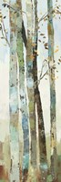 Towering Trees I Fine Art Print