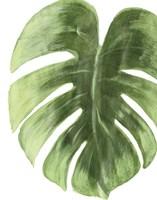 Palm Green I Fine Art Print