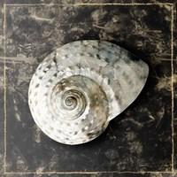 Marble Shell Series II Framed Print