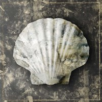 Marble Shell Series IV Framed Print