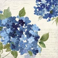 Hampton Hydrangea I Fine Art Print