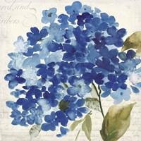 Hampton Hydrangea II Fine Art Print