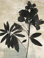 Inky Floral II Fine Art Print