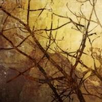 Ombre Branches I Fine Art Print