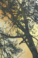 Bubbly Branches Fine Art Print