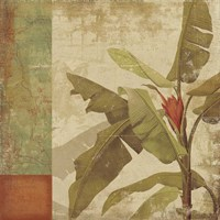Planta Fine Art Print