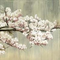Blossoms Fine Art Print