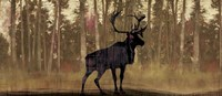 Cold Pine Fine Art Print