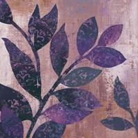 Viola I Fine Art Print
