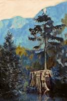 Pine on Blue Fine Art Print