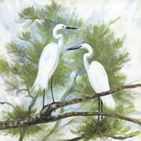 Herons Fine Art Print