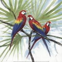 Parrots Fine Art Print
