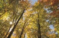 Autumn Forest III Fine Art Print