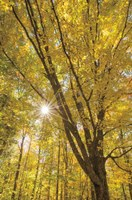 Autumn Forest II Fine Art Print