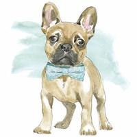 Glamour Pups XI Fine Art Print