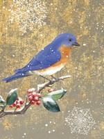 Winter Birds Bluebird Color Fine Art Print