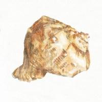 Golden Treasures III on White Fine Art Print