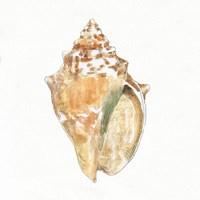 Golden Treasures V on White Fine Art Print