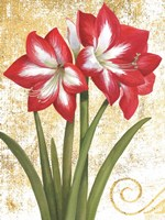 Winter Birds Amaryllis I Gold and White Fine Art Print
