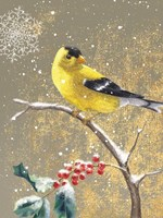 Winter Birds Goldfinch Color Fine Art Print