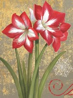 Winter Birds Amaryllis I Fine Art Print