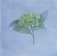 Blue Hydrangea II Fine Art Print