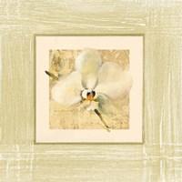 Exotic Floral III Fine Art Print