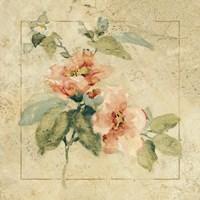 Provence Rose I Framed Print