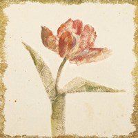 Vintage Flaming Parrot Tulip Crop Fine Art Print
