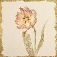 Vintage May Wonder Tulip Crop Fine Art Print