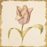 Vintage Blue Parrot Tulip Crop Fine Art Print