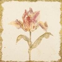 Vintage Zoomer Schoon Tulip Crop Fine Art Print