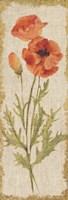 Poppy Panel on White Vintage Fine Art Print