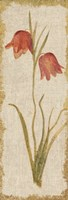 Red Tulip Panel on White Vintage Fine Art Print